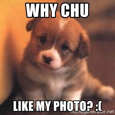 cute puppy - why chu like my photo? :(