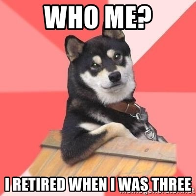 Cool Dog - who me? i retired when i was three