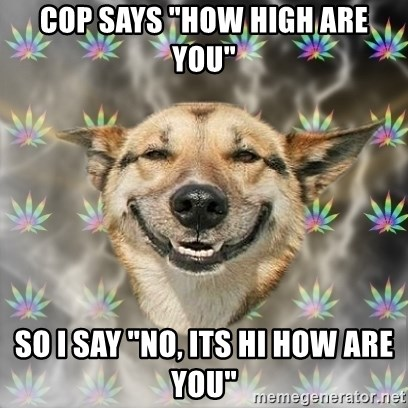 "Stoner Dog - Cop says ""how high are you"" so i say ""No, its hi how are you"""