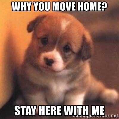cute puppy - Why you move home? Stay here with me