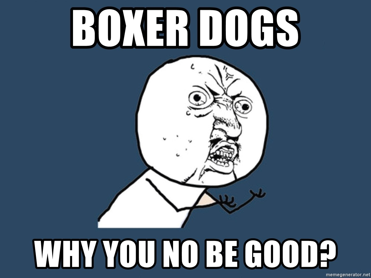 Y U No - Boxer dogs Why you no be good?