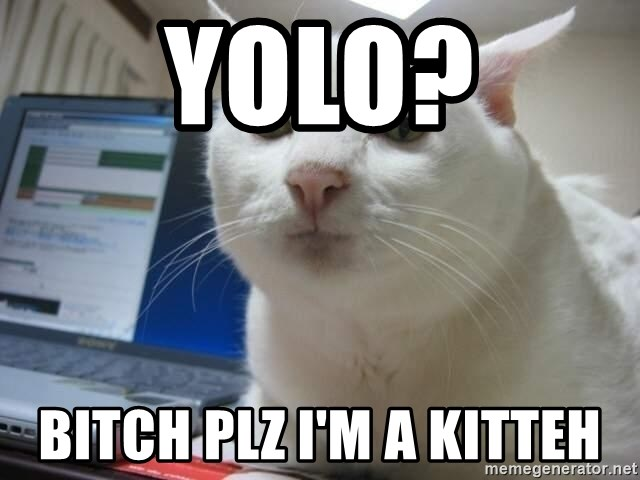 Serious Cat - YOLO? Bitch PLZ I'm a Kitteh