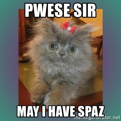 cute cat - PWese sir may i have spaz
