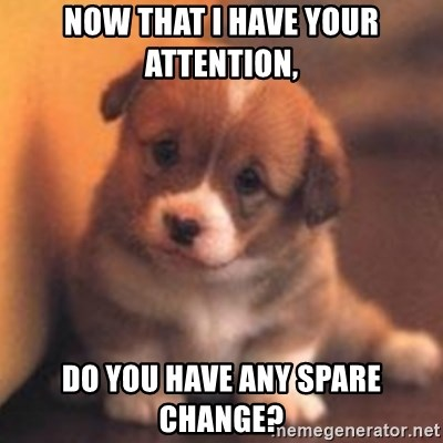 cute puppy - Now that i have your attention, do you have any spare change?