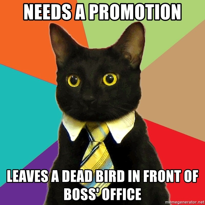 Business Cat - Needs a promotion leaves a dead bird in front of boss' office