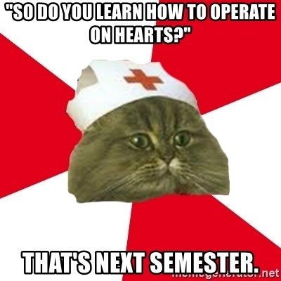 """Nursing Student Cat - """"So do you learn how to operate on hearts?"""" that's next semester."""