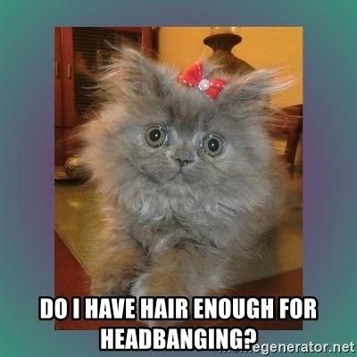 cute cat - Do i have hair enough for headbanging?
