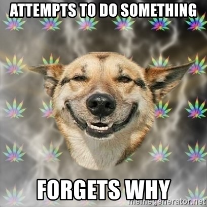 Stoner Dog - Attempts to do something FORGETS WHY