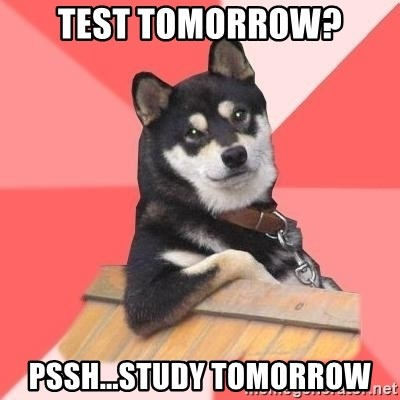 Cool Dog - TEST TOMORROW? PSSH...STUDY TOMORROW