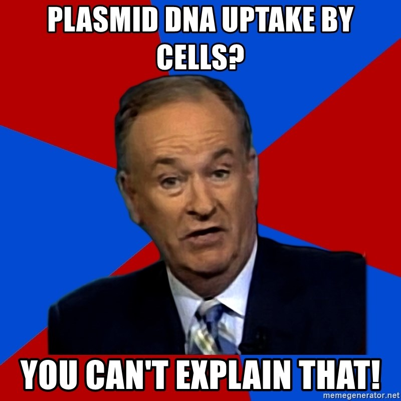 Bill O'Reilly Proves God - PLASMID DNA UPTAKE BY CELLS? YOU CAN'T EXPLAIN THAT!