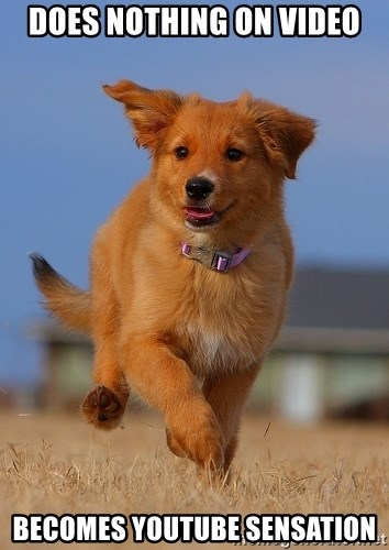 Ridiculously Photogenic Puppy - does nothing on video becomes youtube sensation