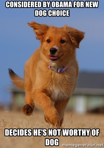 Ridiculously Photogenic Puppy - Considered by obama for new dog choice decides he's not worthy of dog