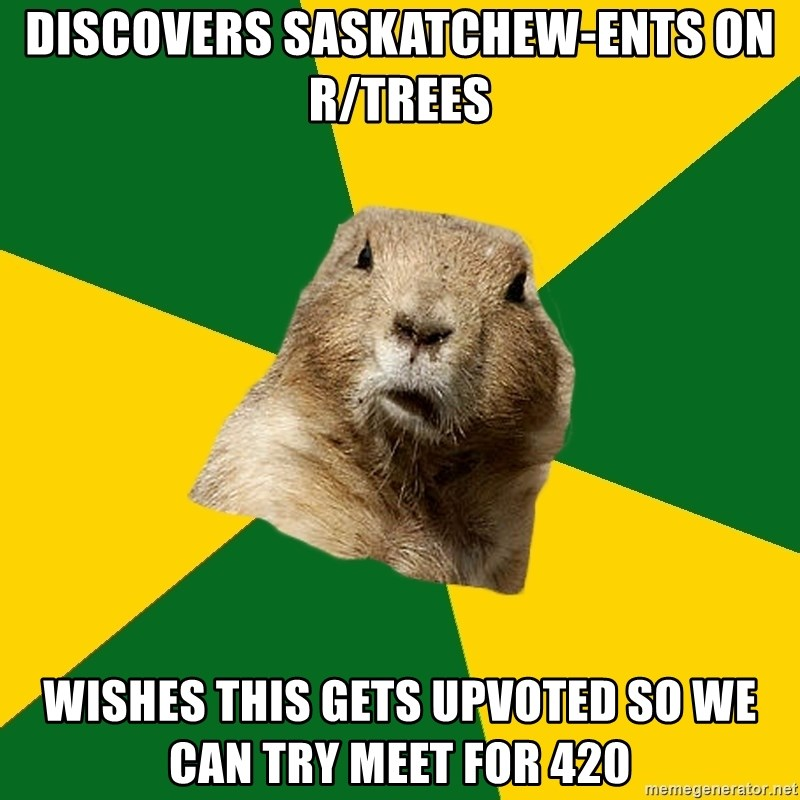 Saskatoon Dog - DISCOVERS SASKATCHEW-ENTS ON R/TREES WISHES THIS GETS UPVOTED SO WE CAN TRY MEET FOR 420