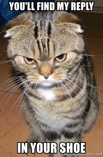 angry cat 2 - you'll find my reply In your shoe