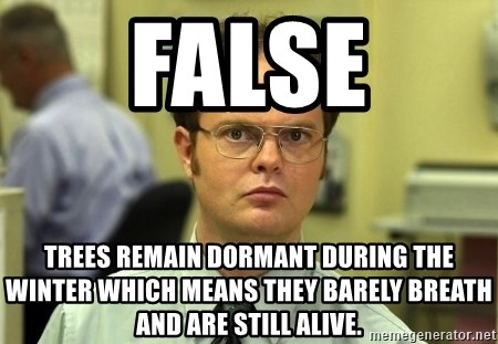 Dwight Schrute - false trees remain dormant during the winter which means they barely breath and are still alive.