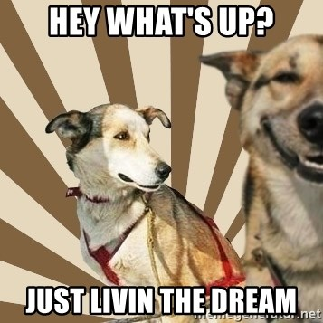 Stoner dogs concerned friend - Hey what's up? Just Livin the dream