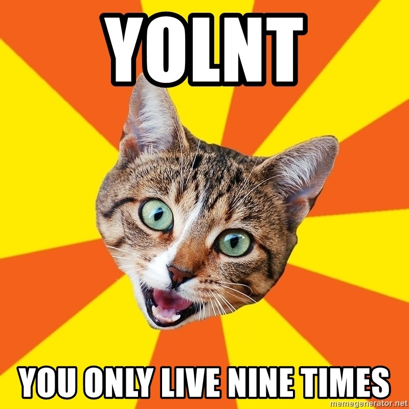 Bad Advice Cat - yolnt you only live nine times