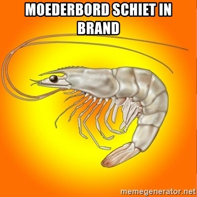 Socially awkward shrimp - moederbord schiet in brand