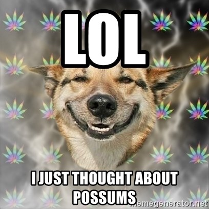 Stoner Dog - LOl I JUST THOUGHT ABOUT POSSUMS