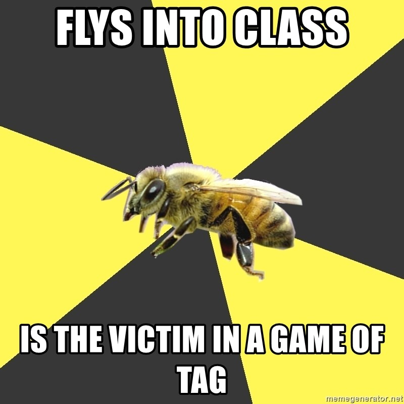 British High School Honeybee - Flys into class Is the victim in a game of tag