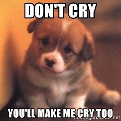 cute puppy - don't cry you'll make me cry too