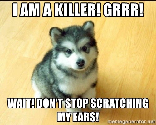 Baby Courage Wolf - I am a killer! GRRR! Wait! Don't stop scratching my ears!