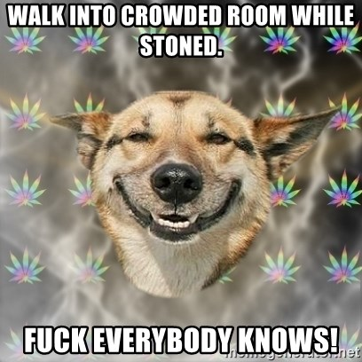 Stoner Dog - Walk into crowded room while stoned. FUCK EVERYBODY KNOWS!