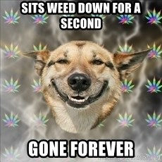 Original Stoner Dog - sits weed down for a second gone forever