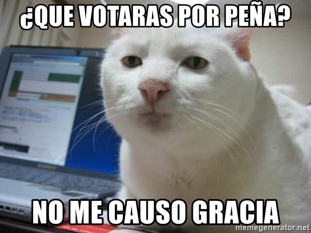 Serious Cat - ¿que votaras por peña? no me causo gracia