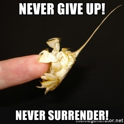 Fighty crab - Never give up! never surrender!