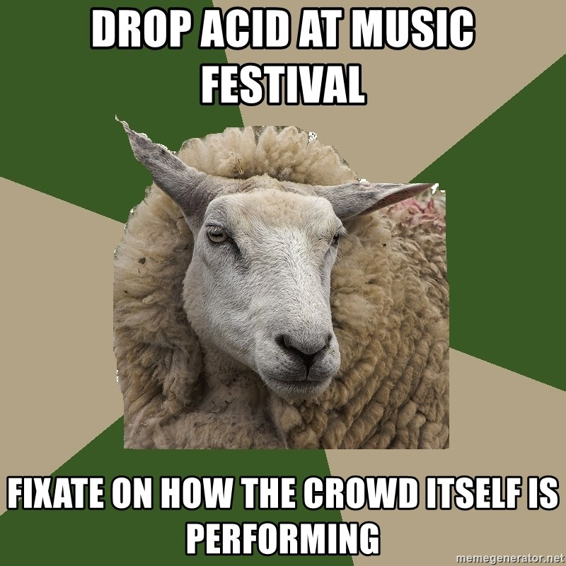 Sociology Student Sheep - drop acid at music festival fixate on how the crowd itself is performing