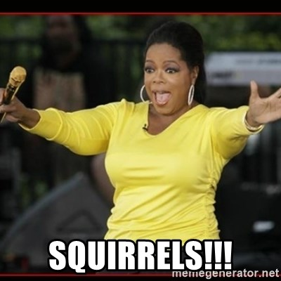 Overly-Excited Oprah!!!  - squirrels!!!