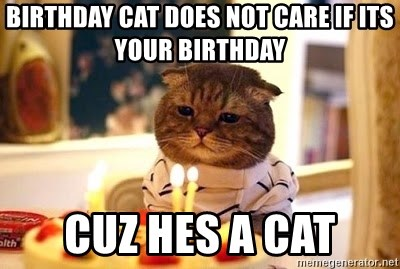 Birthday Cat - BIRTHDAY CAT DOES NOT CARE IF ITS YOUR BIRTHDAY CUZ HES A CAT