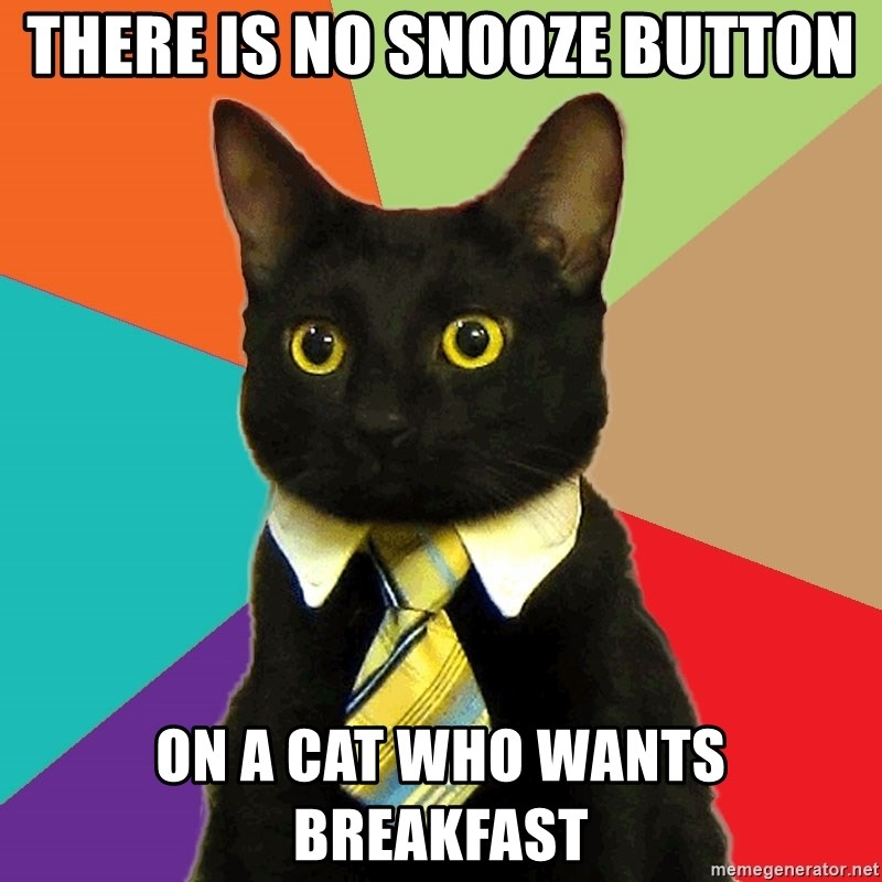 Business Cat - there is no snooze button on a cat who wants breakfast