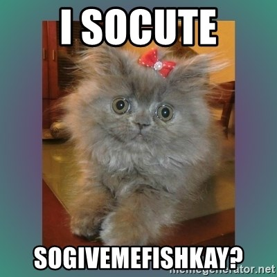 cute cat - I socute sogivemefishkay?