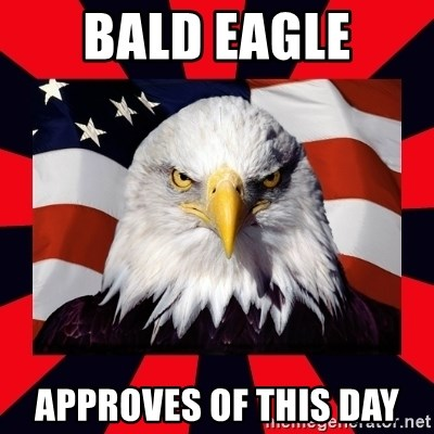 Bald Eagle - Bald eagle Approves of this day