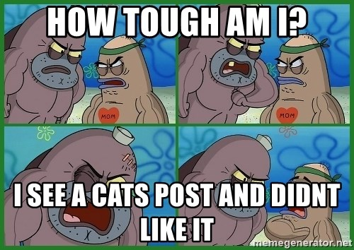 How tough are you - how tough am i? i see a cats post and didnt like it
