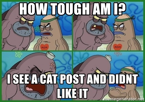 How tough are you - how tough am i? i see a cat post and didnt like it