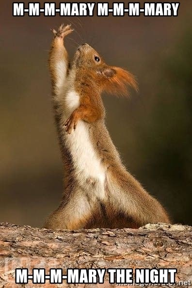 dramatic squirrel - m-m-m-mary m-m-m-mary m-m-m-mary the night