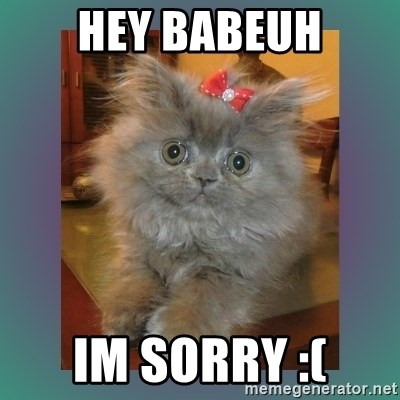cute cat - Hey babeuh Im sorry :(