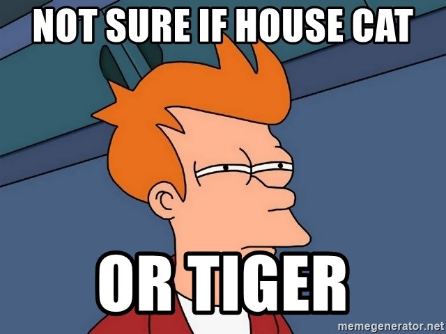 Futurama Fry - Not sure if house cat Or tiger