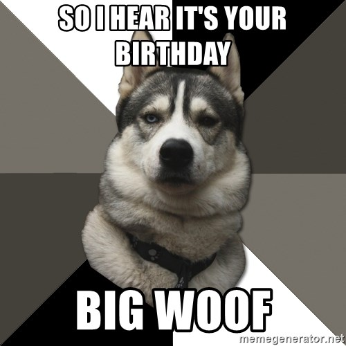 Wise Husky - So I hear it's your birthday Big woof