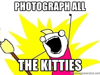 X ALL THE THINGS - Photograph all the kitties