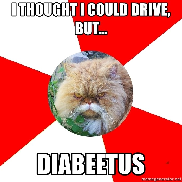 Diabetic Cat - i thought I could drive, but... diabeetus