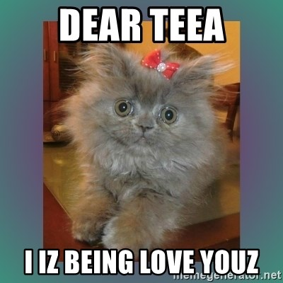 cute cat - Dear Teea I iz being love youz
