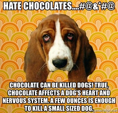 SAD DOG - hate chocolates....#@&*#@ Chocolate can be killed dogs! True, chocolate affects a dog's heart and nervous system. A few ounces is enough to kill a small sized dog.