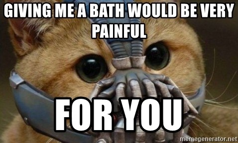 bane cat - Giving me a bath would be very painful for you