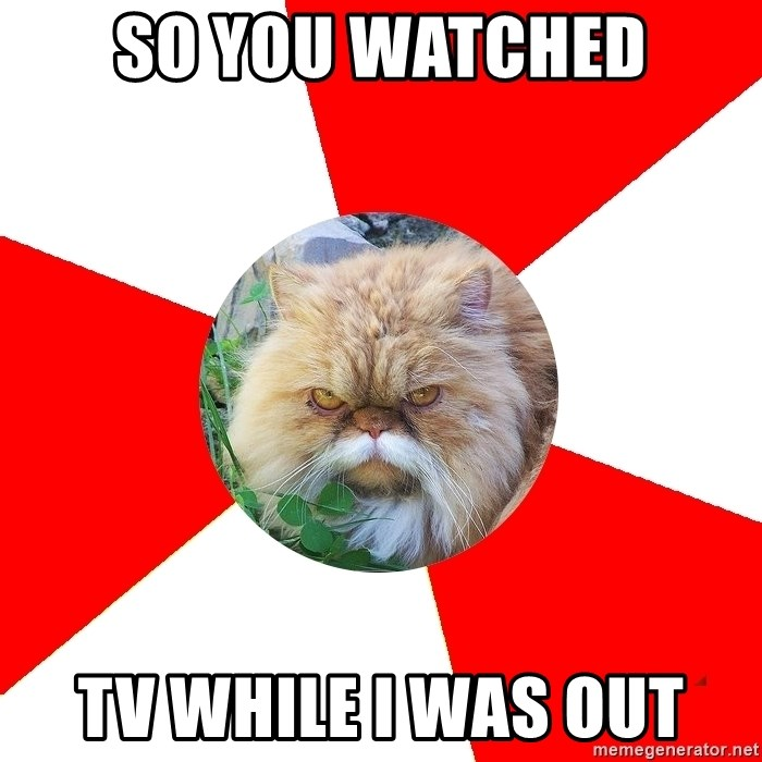 Diabetic Cat - so you watched TV while i was out