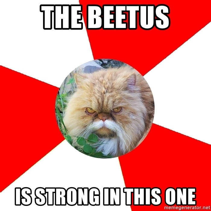Diabetic Cat - The beetus is strong in this one