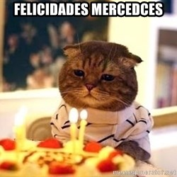 Birthday Cat - Felicidades Mercedces